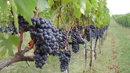 Diritto agroalimentare e vitivinicolo, nasce un Osservatorio